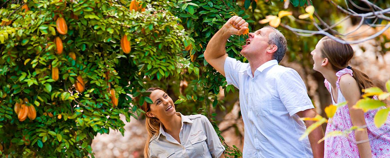 Экскурсия - Байрон Бей и тематический парк Мир Тропических фруктов