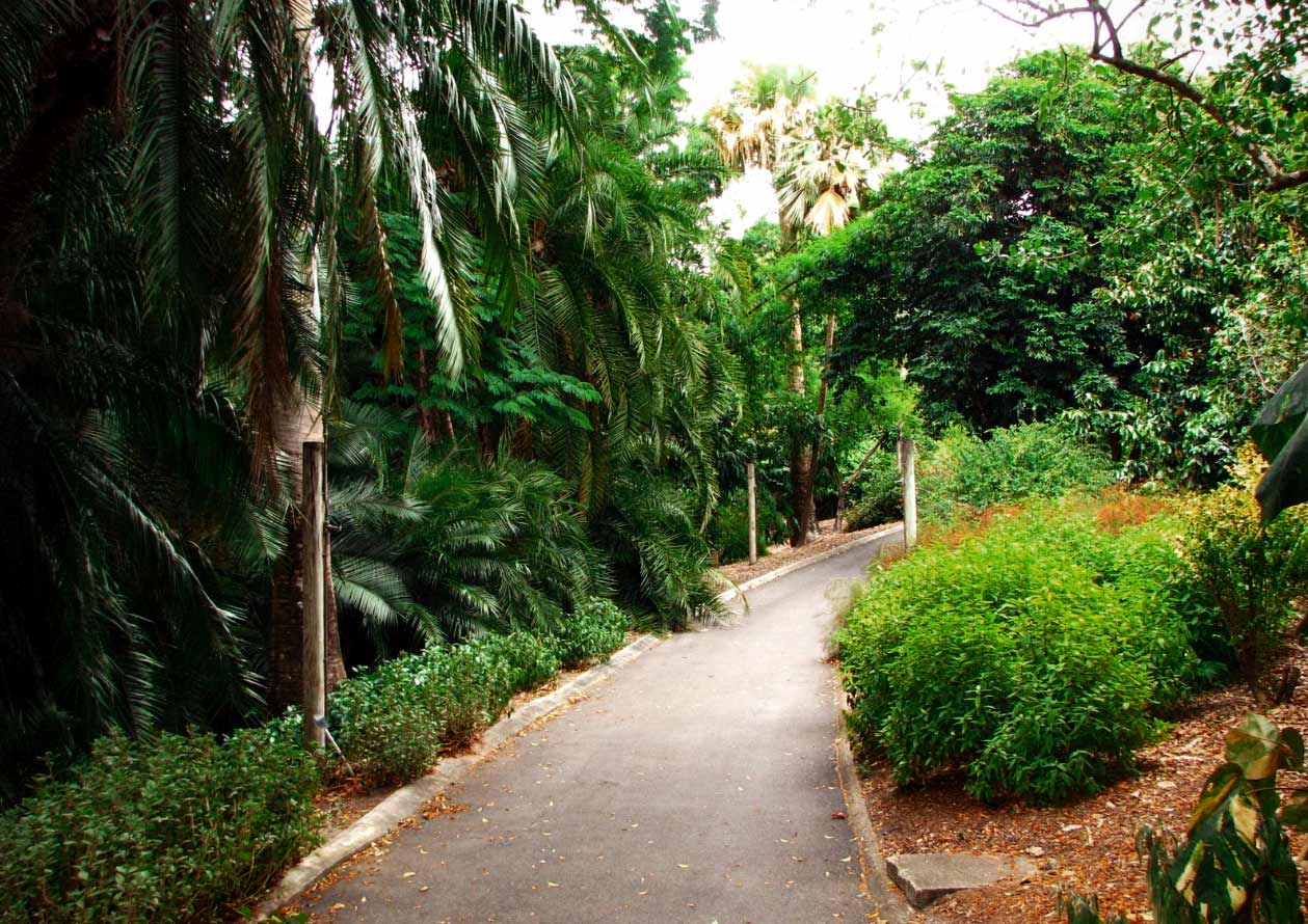 Ботанический-Сад-Брисбена2