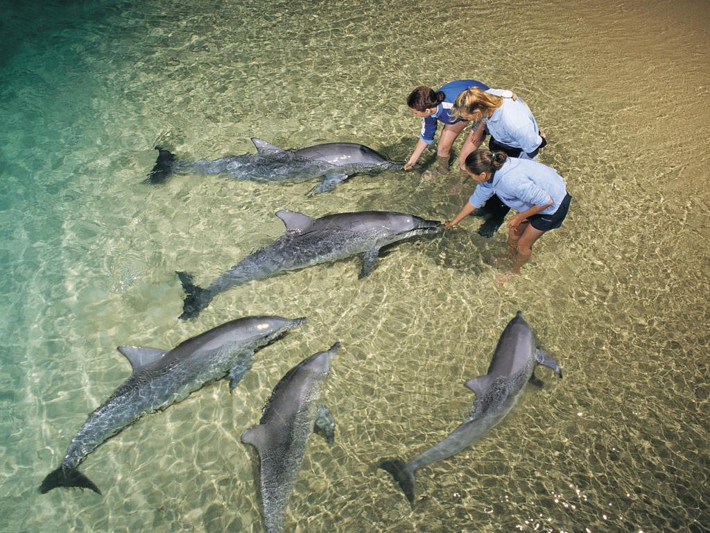 dolphin-feeding-from-above-Достопримечательности Брисбена