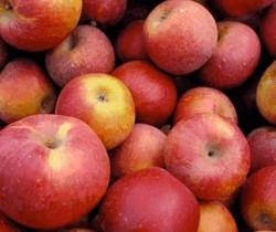 Страны, где растут яблоки