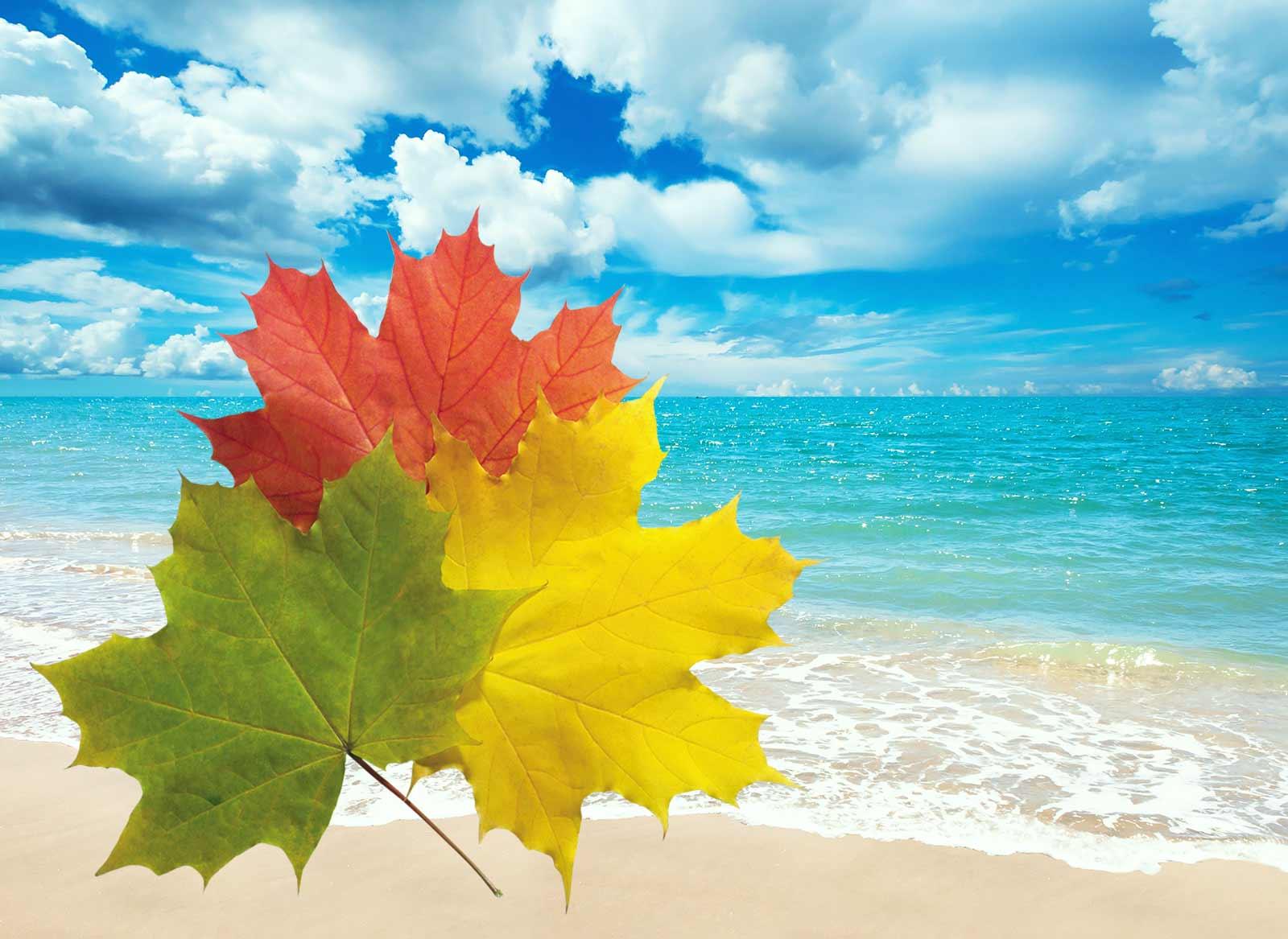 открытки осень и море яндексе народ просто
